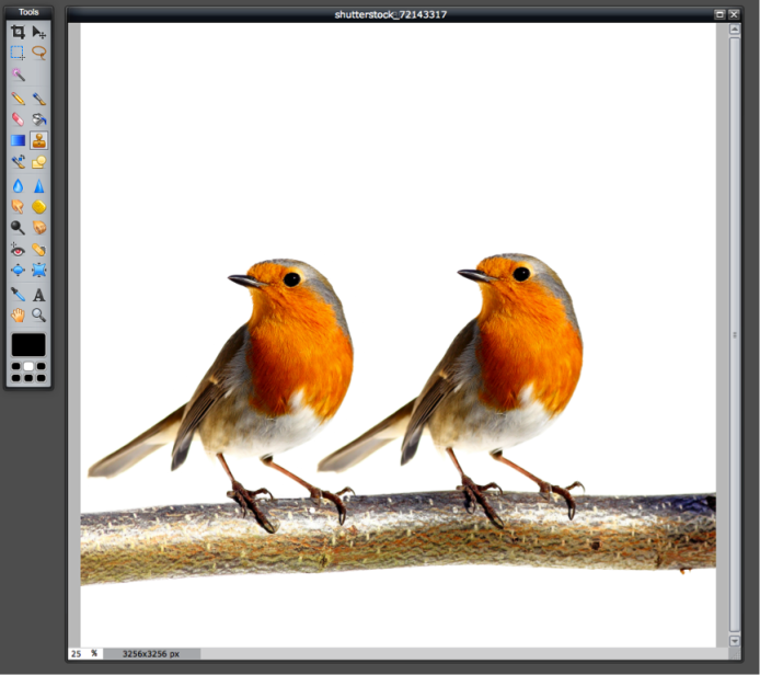 Two Robins 2